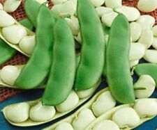 Henderson Bush Lima Beans - 20 Seeds - COMBINED S/H!