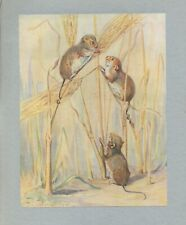 HARVEST MOUSE  BEAUTIFUL ANTIQUE BOOKPLATE ART PRINT BARBARA BRIGGS GREAT GIFT