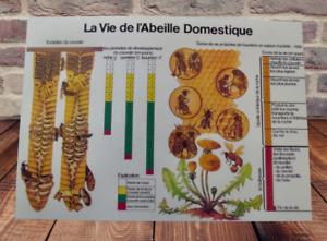 Décoration Murale,Set de Table 42 x 30 cm Vie de l'abeille Domestique Évolution