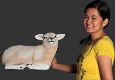 Texelaar Lamb Resting