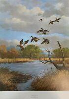 Ken Smallwood - Drifting In - Mallard Ducks - Ltd Ed Print - Hand Signed