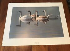 Family of Swans by Gary Moss signed and numbered print