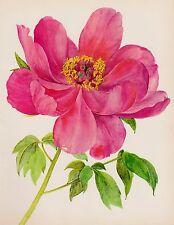 Vintage PEONY Botanical Print Romantic Pink Flower Gallery Wall Art Shrub 2158
