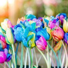 1 Pack 10 Rainbow Tulip Seeds Bonsai Rare Herb Garden Flower Pot Seed S095