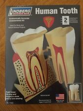 Lindberg Science Kits HUMAN TOOTH Model Kit No. 71312 New Sealed