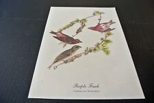 Vintage John James Audubon, Purple Finch Bird Print 9 x 11 Ec