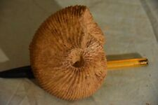 ammonite Epimayaites plamatum oxfordien Atsimo-Andefana, Madagascar 90 mm