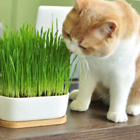 Cat Grass High Survival Rate Natural Cat Grass Cat Hairball Control Toy E&F