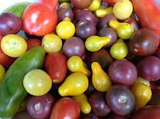 Organic Heirloom Cherry Tomato Collection. Plant a Rainbow in Garden - 50 Seeds