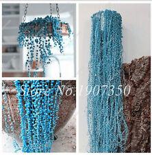 Blue Pearl Chlorophytum Seeds Plants Bonsai Office Desk Flowers Rare 200pcs