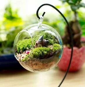 Clear glass terrarium greenhouse with black stand