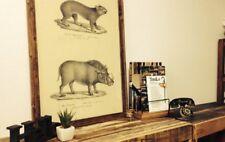 Premium vintage poster three pieces package rat&wild roar /hyena /gazelle&serow