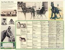 Horse Dan Patch Pacer Harness Racing Picture Pedigree  chart