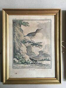 Gravure XVIII encadrée aquarellée De SEVE oiseau ornithologie Le Todier