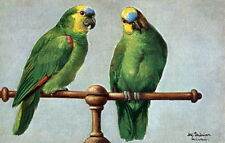 Antique Art~Schonian~Colorful Blue Fronted Amazon Parrots~NEW Large Note Cards