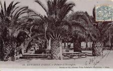 CPA ALGERIE ENVIRONS D´ORAN PALMIERS A MISSERGHIN (cpa émail