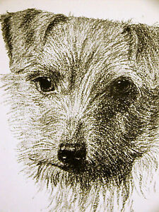 Francis Wardle 1935 NORWICH TERRIER Vintage Dog Print Matted