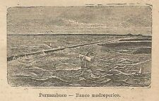 A9808 Pernambuco - Banco madreporico - Xilografia Antica del 1906 - Engraving
