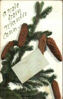 Niantic CT Pine Cone Greeting c1910 Postcard