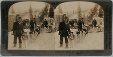Keystone Stereoview Gold Miners, Camp & Dogs in ALASKA from 1910's Education Set