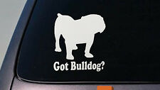 "Bulldog 6"" Sticker decal vinyl english bulldog bully sourmug bull  olde *D637*"