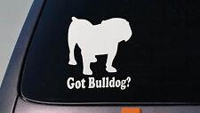 """Bulldog 6"""" Sticker decal vinyl english bulldog bully sourmug bull olde *D637*"""