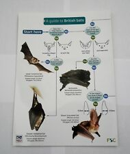 A laminated Guide to British Bats by Kate Jones