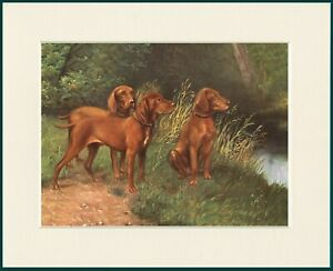 HUNGARIAN VIZSLA DOG GROUP LOVELY PRINT MOUNTED READY TO FRAME