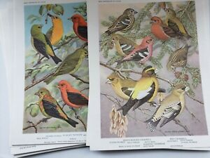 Set 24 Bird Portraits In Color Univ. Minnesota 1960 Reprint of 1934  MINT