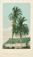 SAN DIEGO CA - Palms at San Diego (Planted in 1769) - udb