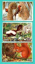 Germany ERDAL KWAK ANIMAL lot of 7 Vintage cards 221