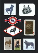 More details for schipperke mounted collection of vintage dog cards & bands great gift