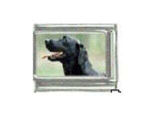 9mm Classic Size Italian Charms C3 Dog Dogs Black Labrador