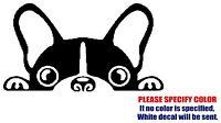 """Boston Terrier JDM Funny Vinyl Decal Sticker Car Window Bumper Wall laptop 7"""""""