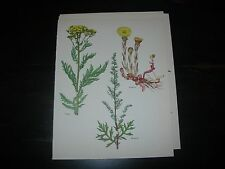 Wild Flowers Prints Vintage Botanical Print flowers lot of 12
