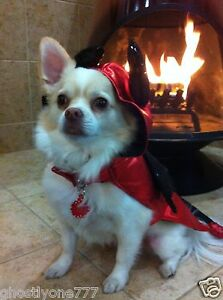 red black devil  costume dog pet clothes Halloween outfit cute doggy small