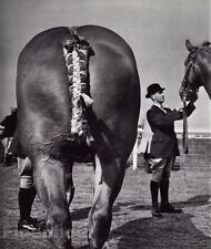 1959/68 Vintage 11x14 ROYAL SHOW Equestrian Horse Fair England Photo Art BRASSAI