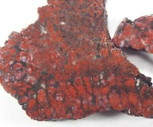 """Red Plume Agate Slab Pair Cady Mountain CA  See Scale Size 1/4"""" thick 58 Grams"""