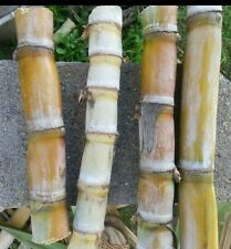 4 sticks Sugar Cane Green Juicing Chewing Organic Plant