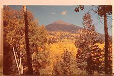 Arizona AZ Flagstaff Snow Bowl Drive Yellow Aspen San Francisco Peaks Postcard