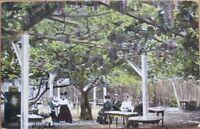 San Gabriel, CA 1910 Postcard: Under Big Grape Vine - California Cal