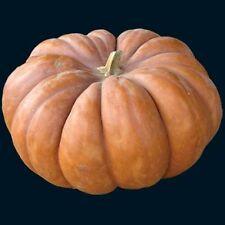 Pumpkin MUSQUEE de PROVENCE-Pumpkin Seeds-MARKET FAVOURITE-16 SEEDS.