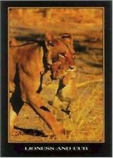 LIONESS CARRYING CUB ~ 24x36 ANIMAL POSTER ~ Lion