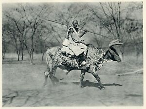 1930 photogravure - MAN RIDING SPOTTED OX - Lybia African People vintage print