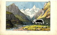 1860 Instructive Picture Book HC LITHOGRAPH yak