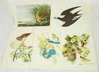 Hawk Fern Jay Oriole Roger Tory Peterson Audubon Bird Vintage 1950 Art Print Lot
