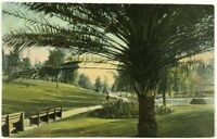 1900's Hollenbeck Park Bench Walkway Palm TreeLos Angeles California Postcard
