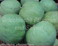 🔥  TINDA Baby-Kürbis Apfel-Kürbis aus Indien 10 Samen SEHR SELTEN Tolles Gemüse