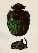 Vintage BEETLE Print DUNG Beetle Home Decor Gallery Wall Art Insect Print 1782