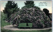 LOS GATOS, California  CA   Handcolored  FAIRVIEW PLAZA Rose Bush 1912  Postcard